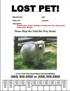 Lost Dog Flyer Template-10