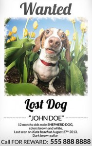 Lost Dog Flyer Template-9