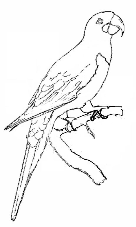Hyacinth Macow Coloring Page