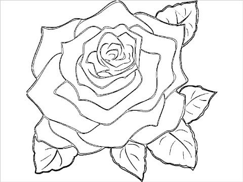 Blue Rose Coloring Page
