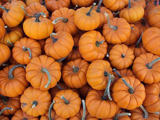 pumpkin - things that are orange