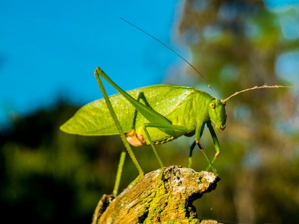 Grasshopper - Things that are green