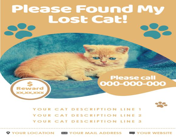 Found My Lost Cat