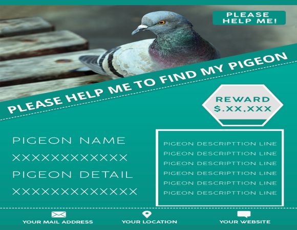 My Lost Pigeon